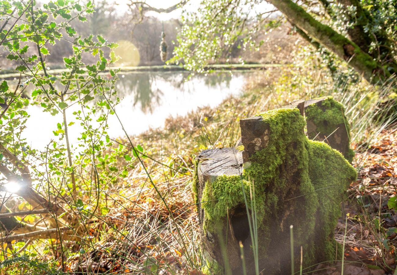 Vakantieboerderijen in Germansweek - Yeworthy Eco-Treehouse